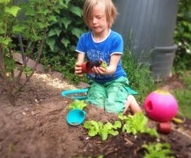 Мальчик играет в огороде